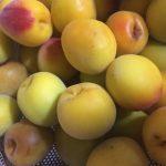 梅しごと 酵素ジュース